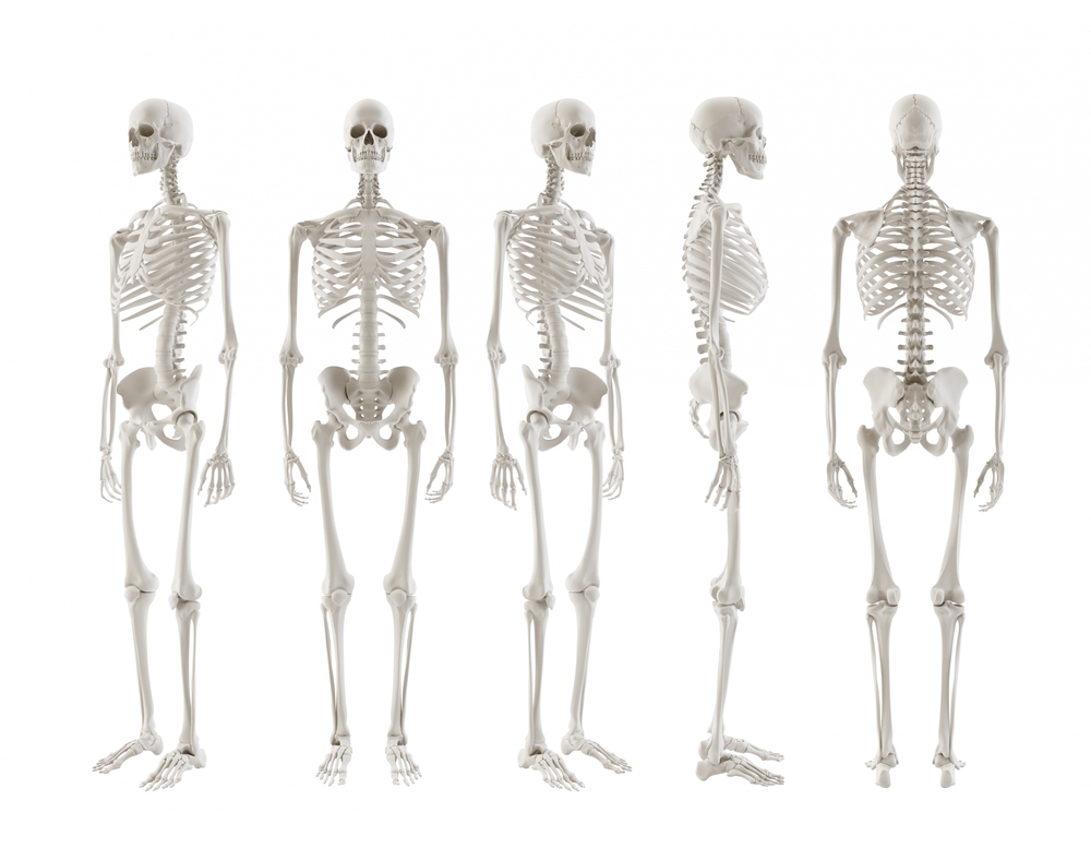 antal knogler i kroppen